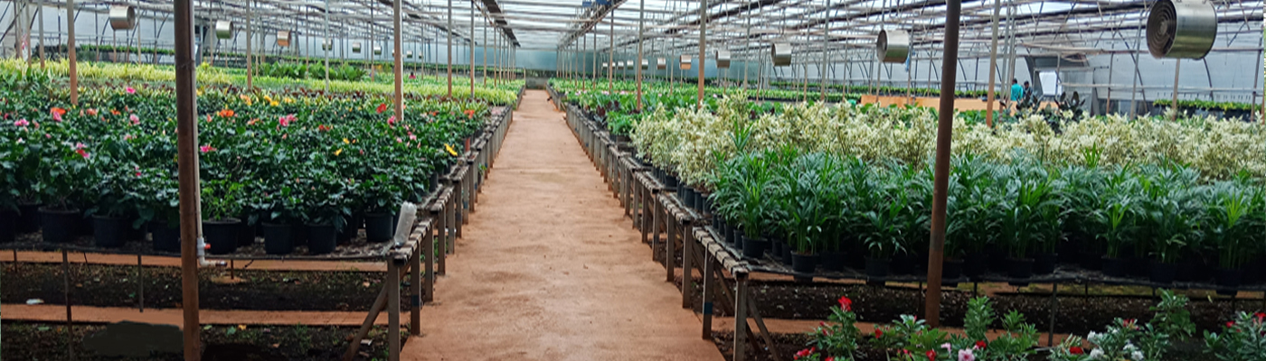 Polyhouse Manufacturers In India Greenhouse Manufactures